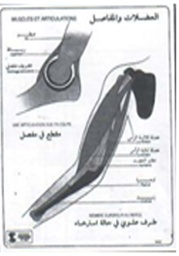 [19002] Muscles et articulations